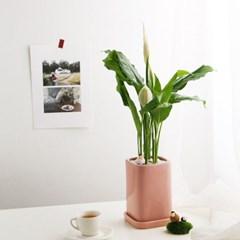 공기정화식물_스파티필름+피규어