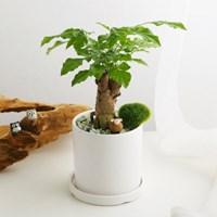 소소한잡화점 공기정화식물_녹보수+피규어