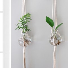 공기정화식물 수경재배 둥근 vase SET+마크라메 행잉