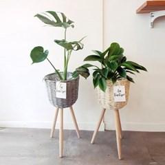 중형사이즈의 공기정화식물에 라탄화분으로 감성더하기