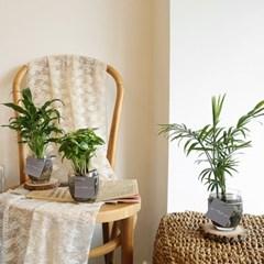 [plant] 공기정화식물 - 유리볼 수경식물set 4종(택1)_(665902)