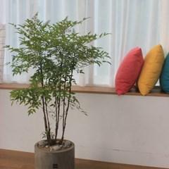 [집들이선물/인테리어식물]4계절 아름다움이 스며든 팔_(1369756)