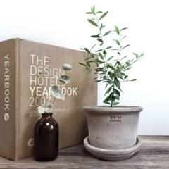 milan 키우기 쉬운 미니식물+이태리 테라코타 화분