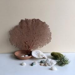 인테리어소품 - 부채 산호 (Sea Fan Gorgonia)