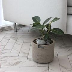 [브라더가든/전국배송가능]책상위 화분무지뱅갈고무나무_(1360521)
