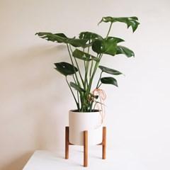수경식물 몬스테라화분(포트)L + 우드스탠드 셋트