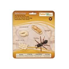 [사파리엘티디] 663916 개미의성장과정 교육피규어_(1410497)