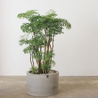[개업축하/카페인테리어]실내에서 잘 자라는 에코식물_(1439464)