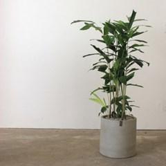 [공기정화식물/인테리어화분]미세먼지제거에 우수한 공_(1434110)