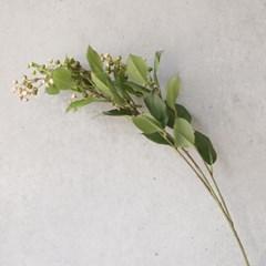 미니 열매 가지 1P_(2791520)