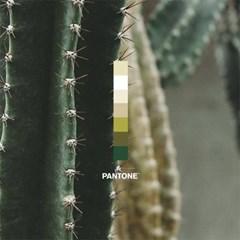 팬톤삭스 Cactus 추천 세트