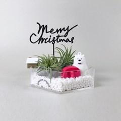 [틸란드시아 이오난사] 공기정화식물 테라리움 키트