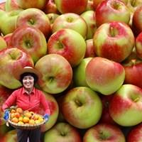 경북 상주 더상큼 부사 사과 ( 14과~18과 5kg )