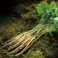 남도장터/벧엘 새싹삼 특대 25뿌리