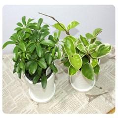 초록식물키우기 10인용세트(도자기화분포함)