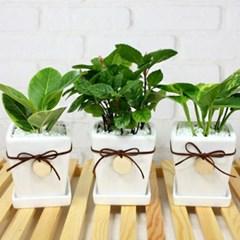 미세먼지제거식물 3종세트