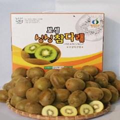 [설명절] 싱싱 골드키위 5kg 55-58과