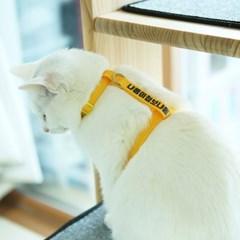 [커스텀] 메세지 고양이하네스
