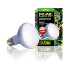 파충류 바스킹 스팟 램프 75w / PT-2132_(1030842)