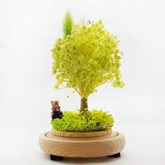 [숲앤숨]유리돔 라임 안개나무 무드등 - 프리저브드 드라이플라워
