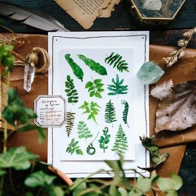 [OURS] Ferns Transfer Sticker