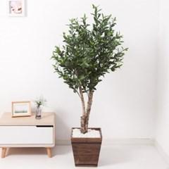 올리브나무 170cm 우드 5-5 조화 인조 나무 인테리어 FR_(1689429)