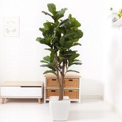 떡갈고무나무 170cm 아크릴 5-5 조화 인조 나무 인테리_(1689425)
