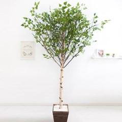 기본Y자형 자작나무 230cm 우드 5-5 조화 인조 나무 인_(1689418)