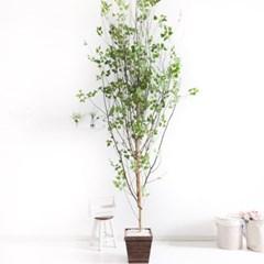 A자형자작나무320cm 우드 5-5 조화 인조 나무 인테리어_(1689412)