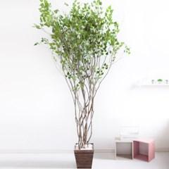 라인-자작나무 245cm 우드 5-5 조화 인조 나무 인테리어_(1689403)