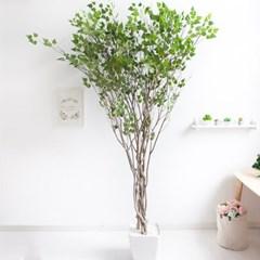 라인-자작나무 245cm 아크릴 5-5 조화 인조 나무 인테리_(1689402)