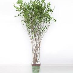 라인-자작나무 245cm 빈티지 5-5 조화 인조 나무 인테리_(1689400)