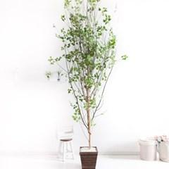 A형자작나무화분set 230cm K 조화 인조 나무 인테리어 F_(1689395)