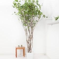 라인-자작나무화분set 210cm K_M 조화 인조 나무 인테리_(1689392)