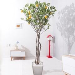 라인-레몬나무화분set 240cm K 조화 인조 나무 인테리어_(1689389)