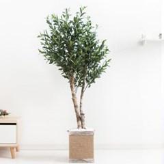 올리브나무화분set 170cm K_M 조화 인조 나무 인테리어_(1689385)