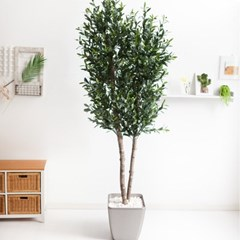 올리브나무화분set 230cm K_M 조화 인조 나무 인테리어_(1689383)