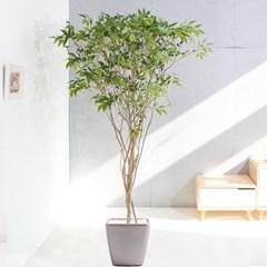 라인-올리브나무화분set 240cm 조화 인조 나무 인테리어_(1689370)