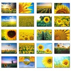 식물그림 보태니컬아트 꽃사진 해바라기 사진포스터