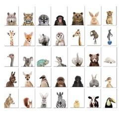 아이방 인테리어 동물 포스터 방수포스터 88종