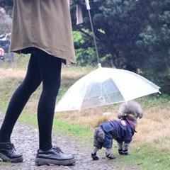 갓샵 강아지 애견 우산 [비오는날 산책 용품 우비 비올때 개우산]