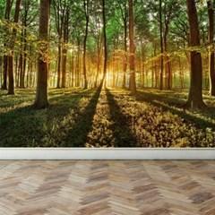 풍경디자인벽지 인테리어뮤럴벽지 숲