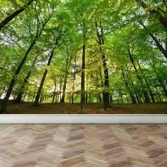 풍경디자인벽지 인테리어뮤럴벽지 울창한 숲