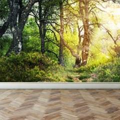 프리미엄벽지 빈티지벽화 포인트벽화 숲을걷다