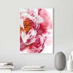블루밍 모란 꽃 액자 보테니컬 그림 인테리어 포스터