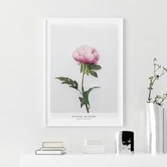 스위트 모란 꽃 액자 보테니컬 그림 인테리어 포스터