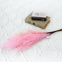 인테리어소품 팜파스(5P) 핑크