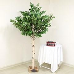 인조나무 조화나무 인테리어조화 자작나무 190 사방형