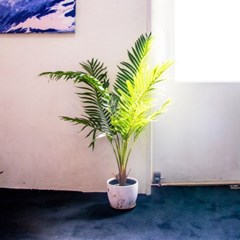 데코 나무 조화 화분 (팜트리)_(1488899)