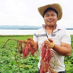 유기농 꿀밤 호박고구마 모듬사이즈 5kg_(1302590)